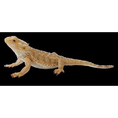 COLLECTA Barzdotasis drakonas (driežas) L 88567